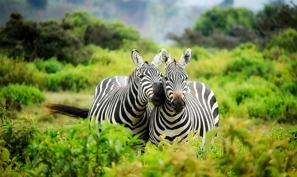 Santuario di Niassa Mozambico nuovo sito by Inusuale