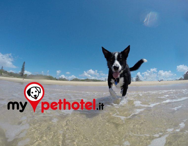 Mypethotel vacanze con il cane